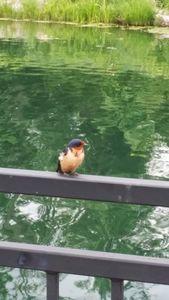 blue bird lake