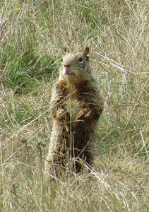 Prairie Friend