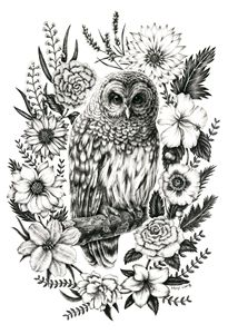 ink illustration_owl