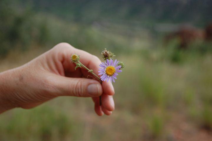 Simple Beauty - Charlotte Marie