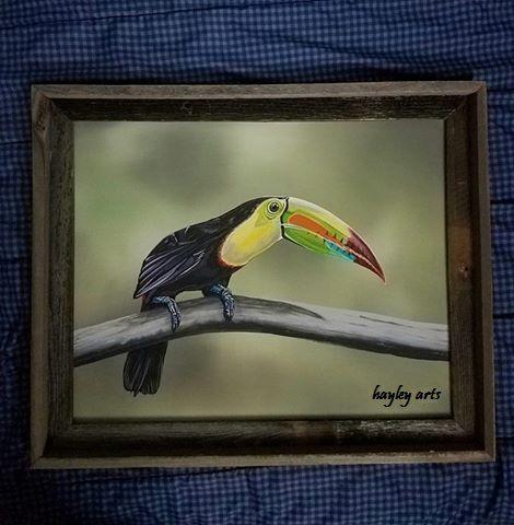 TOUCAN - Hayley's Art