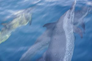 Following the dolphins