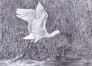 The bird takes off - HOMOMOVING