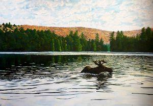 Moose Swimming in Lake Algonquin