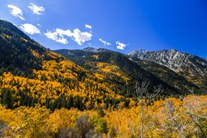 Little Cottonwood in Color