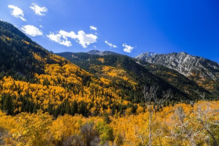 Little Cottonwood in Color - JL Nell Fine Art Photography