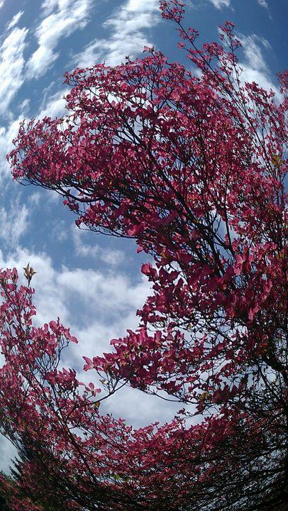 Spring Tree - Hazel Wonder