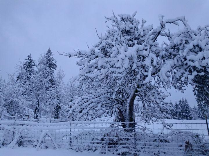 Winter Trees - Hazel Wonder