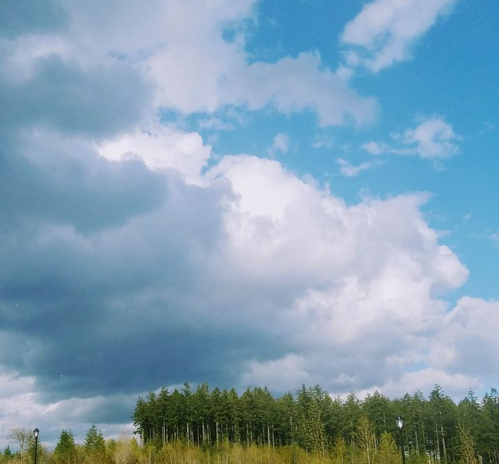 Storm Sky - Hazel Wonder