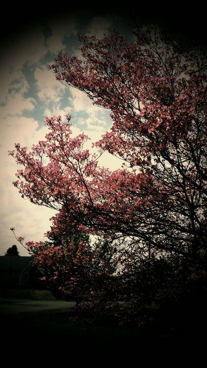 Blooming tree - Hazel Wonder