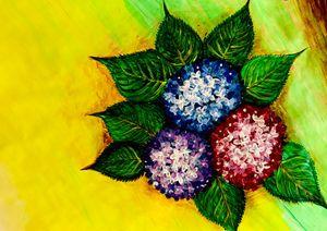 Blossoming Hydrangeas