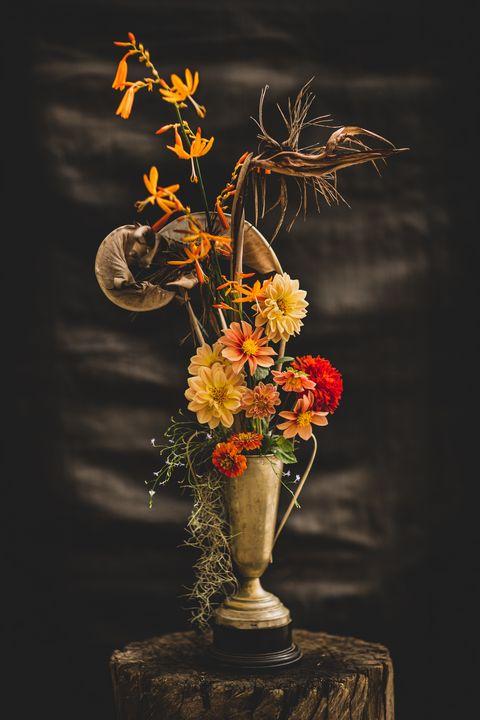 Bird of Paradise - Joe Dreyer Art.