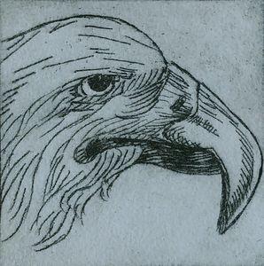 Ritratto dell'uccello