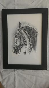 Black Horse Pencil Sketch