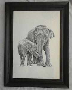 Indian Elephant n baby