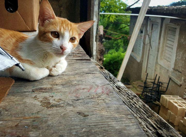 Pensive Feline - Realistic Portraits