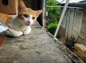 Pensive Feline