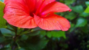 Flower JA #2