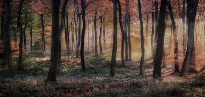 Woodland Autumn Dawn - Ceri David Jones