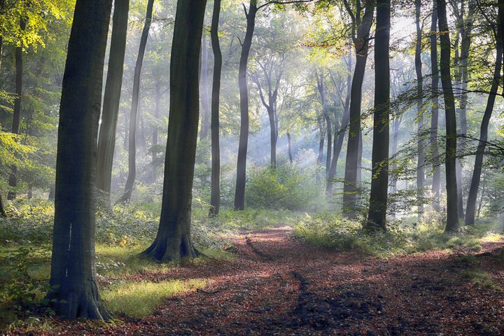Morning Woods - Ceri David Jones
