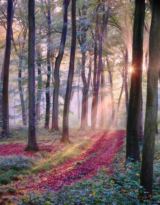 Woodland Light - Ceri David Jones