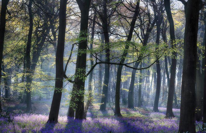 Spring Woodlands - Ceri David Jones