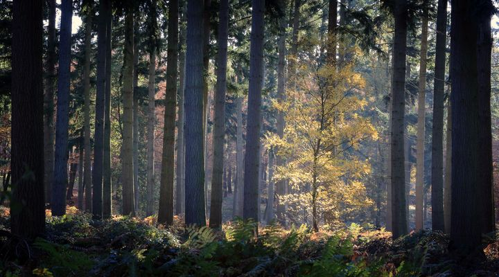 Seeking the Light - Ceri David Jones