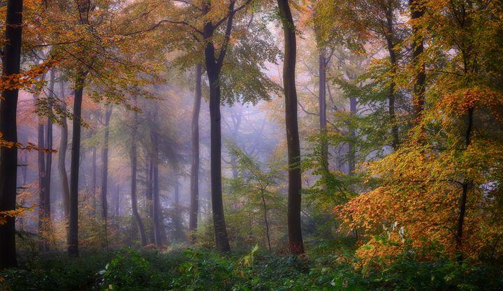 Foggy Autumn Woodlands - Ceri David Jones