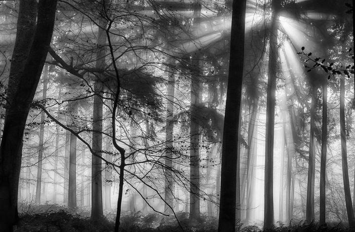 Winter Woods - Ceri David Jones