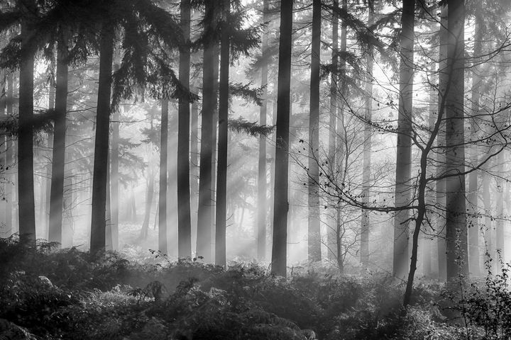 Misy pine woodlands - Ceri David Jones