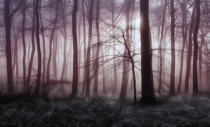 Winter Woodland Dawn - Ceri David Jones