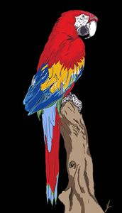 macaw rainforest bird,comic,cartoon, - artline