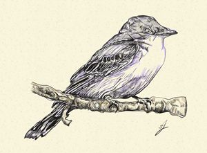 drawing of a bird - artline