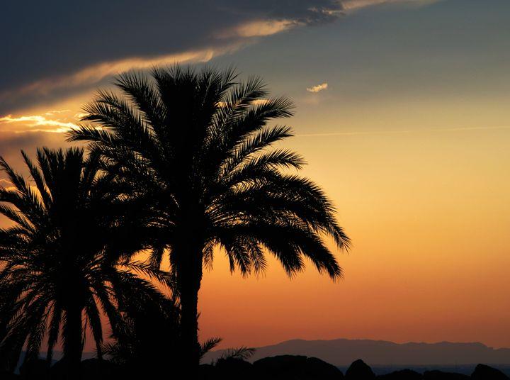 Palm Tree - Artypix Sam Williams