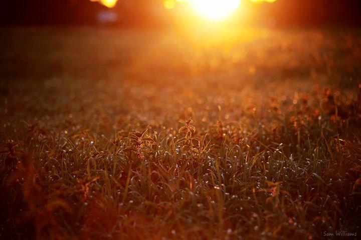 Glorious Sunshine - Artypix Sam Williams