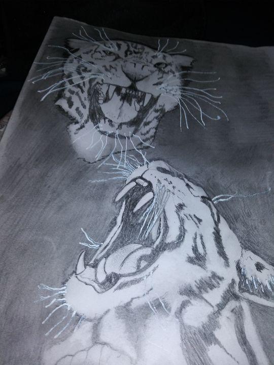 BIG CATS - Sodapop