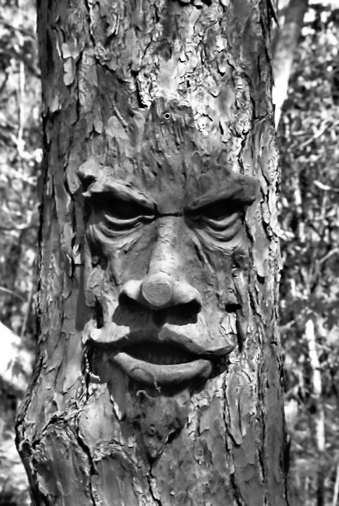 Tree Portrait - GullPhoto Art