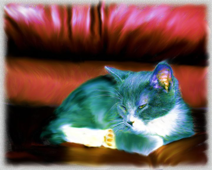 Kitten on Red Chair - GullPhoto Art