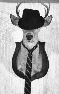 Dressed up Buck
