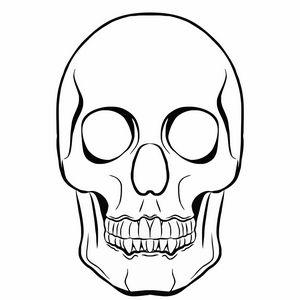 Skull illustration sketch for print