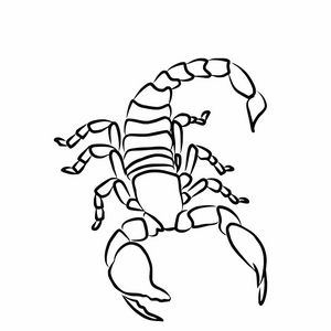 Scorpion sketch illustration