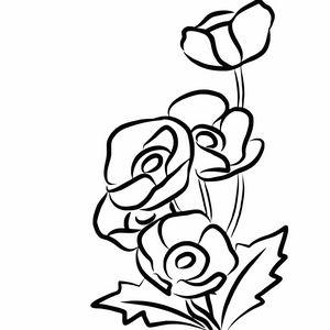 Poppy flower sketch illustration