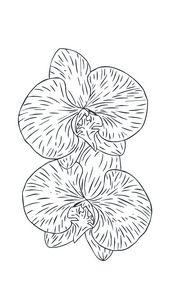 Orchid illustration sketch