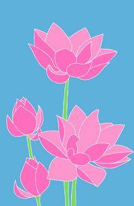 Lotus water lilies illustration