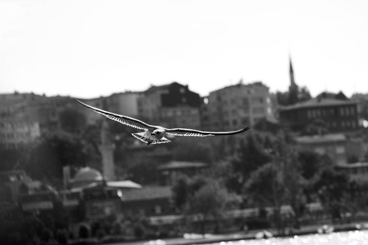 Flight in Istanbul - Álvaro Sánchez Leache Photography