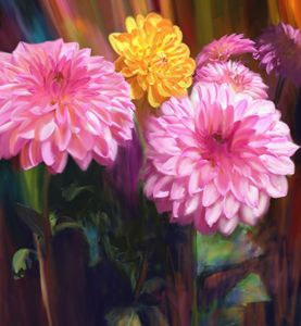 Rainbow Dahlias
