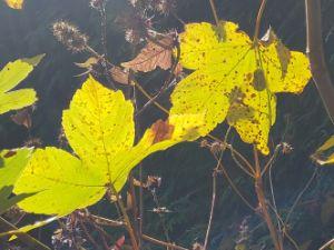 Autumn light - Heijdi's fantastic painted World