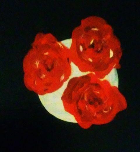 Rosa - Belgica Rodriguez
