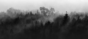 Mist in the Trees 1