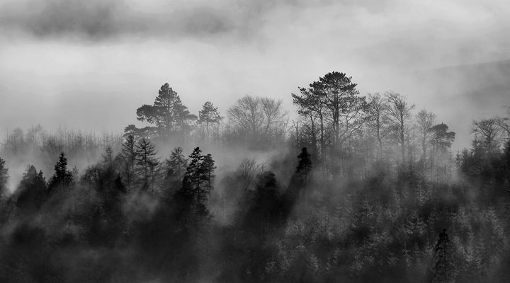 Mist in the Trees 4 - Conor Lynch Photography